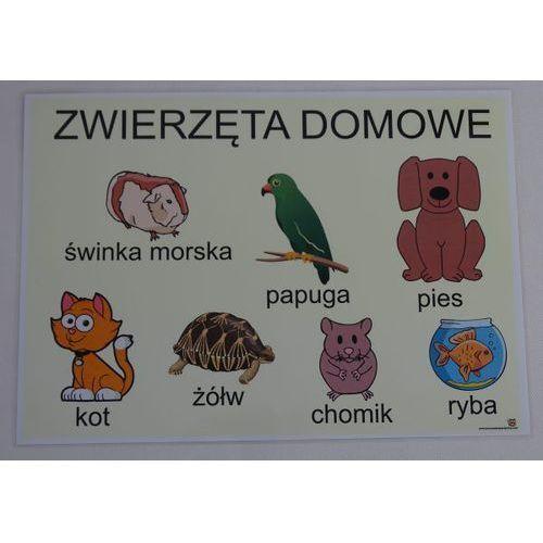 Zwierzęta domowe - plansza demonstracyjna marki Bystra sowa