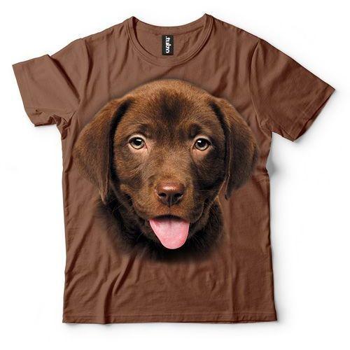 Labrador szczeniak czekoladowy, kolor brązowy