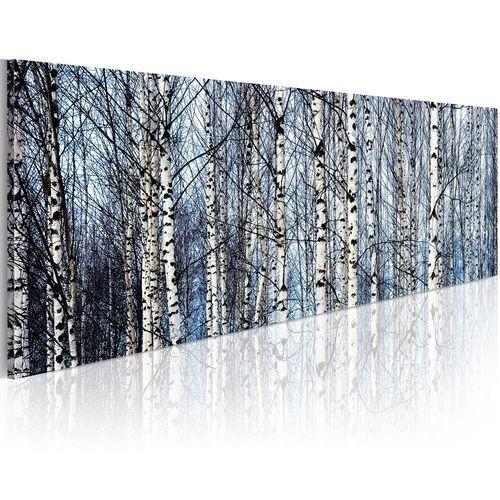 Obraz - Białe brzozy