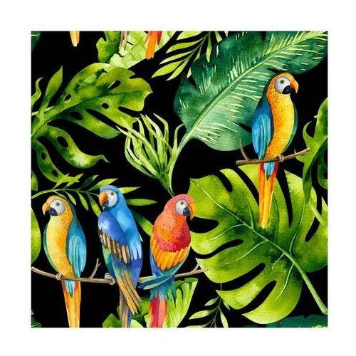 Panel kuchenny szklany Parrots black 60 x 60 cm Alfa-Cer (5902027035858)