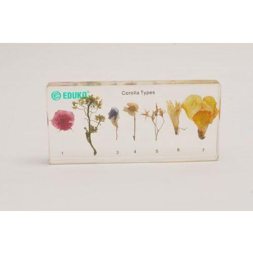 Kwiaty 7 okazów - preparat zatopiony w pleksi marki Eduko