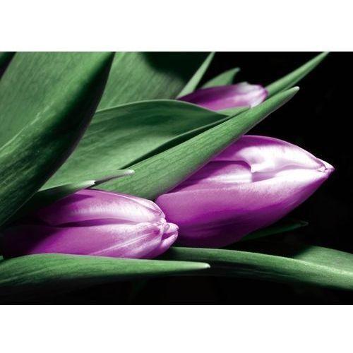 Wally - piękno dekoracji Obraz tulipan p36