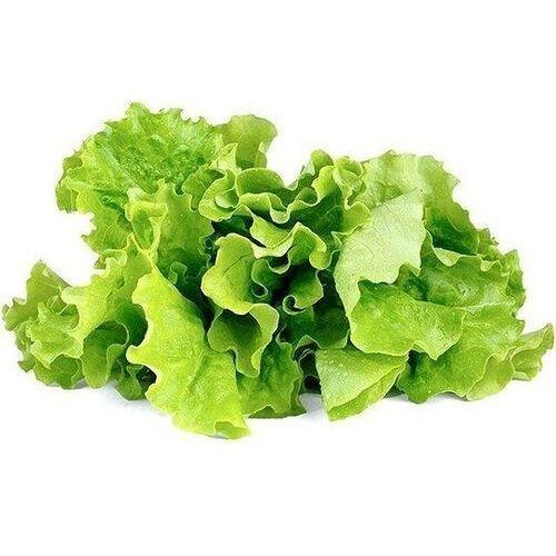 Kapsułki z nasionami smart soil 3 szt. sałata zielona (4742793007731)