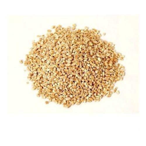 Horeca - surowce Kasza jęczmienna bio (surowiec) (25 kg- cena za 1 kg) (5902448162218)