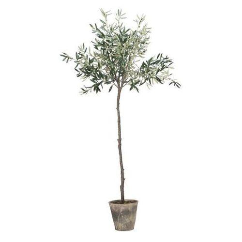 Lene Bjerre Drzewko Oliwkowe L