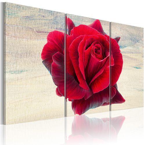 Obraz - Liryczna róża