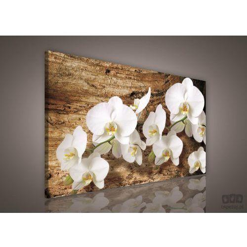 Obraz Białe Storczyki na brązowym tle PP414O1