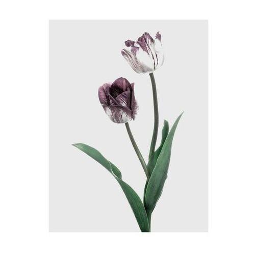 Art canvas Plakat tulipany 30 x 40 cm