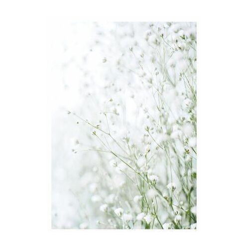 Art canvas Kanwa białe kwiaty i 40 x 50 cm