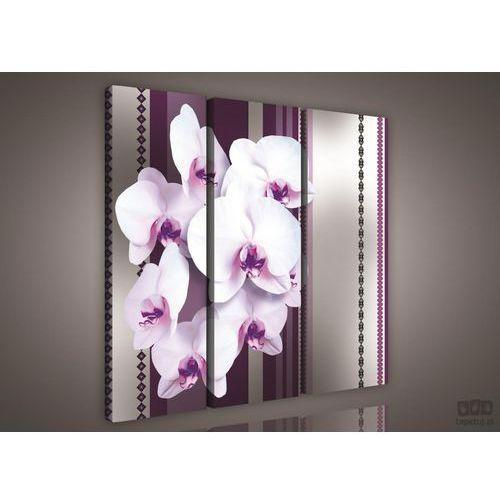 Consalnet Obraz biało-fioletowe storczyki ps827s6