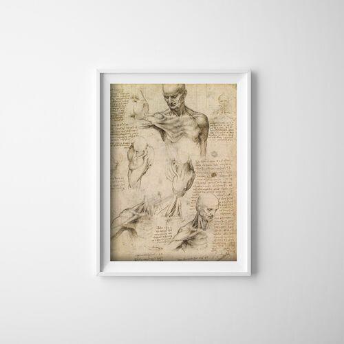 Plakat do pokoju Plakat do pokoju Da Vinci Mięśnie