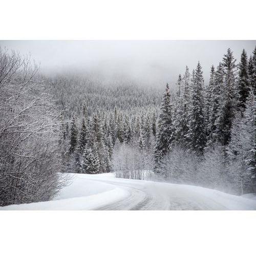 Fototapeta na ścianę droga powadząca przez las zimą FP 5494