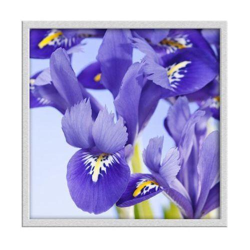 Knor Obraz niebieskie kwiaty 30 x 30 cm