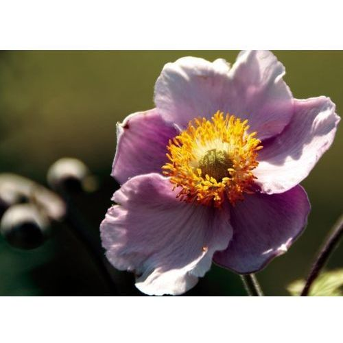 Obraz kwiat p12 marki Wally - piękno dekoracji