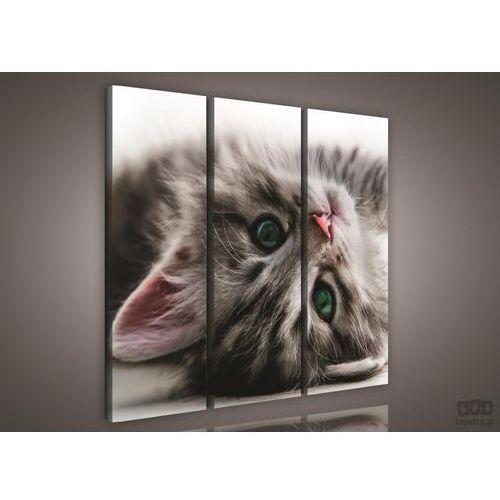 Obraz słodki kociak ps957s6 marki Consalnet
