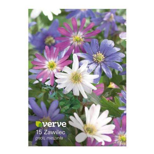 Cebule zawilec grecki Verve mix 15 szt.
