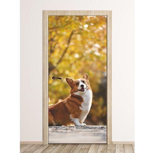 Fototapeta na drzwi pies fp 6216 marki Wally - piękno dekoracji