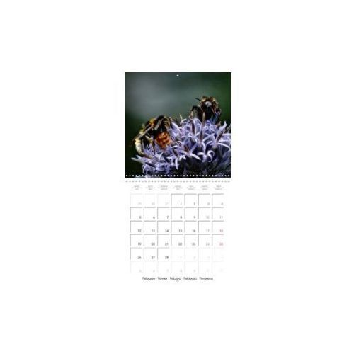 The secret World of Insects (Wall Calendar 2018 300 × 300 mm Square)