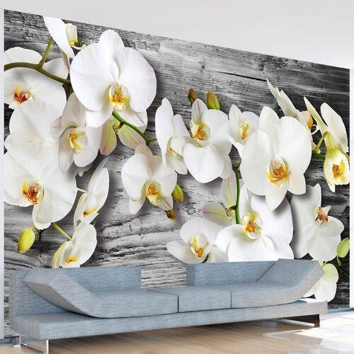 Artgeist Fototapeta - oziębłe orchidee iii