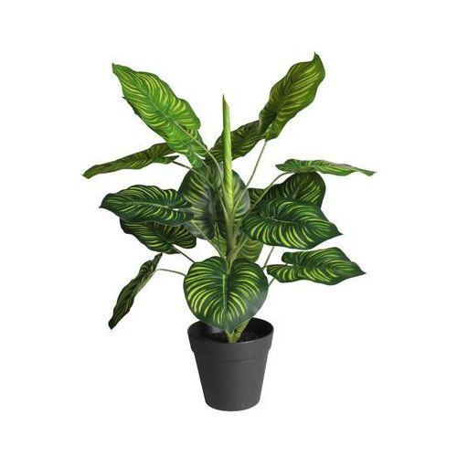 Roślina sztuczna w doniczce MARANTA 45 cm (5908262469854)