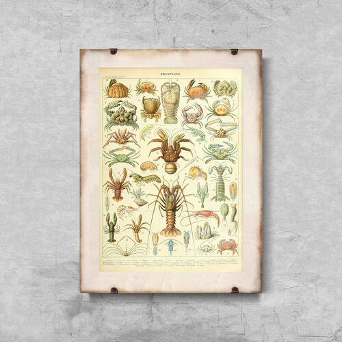 Vintageposteria.pl Plakat do pokoju plakat do pokoju 1909 crustaces adolphe millot