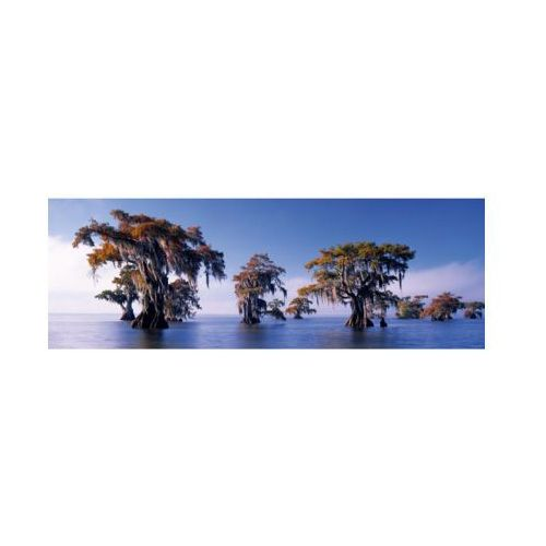 1000 el. bald cypresses, e.humboldt marki Heye