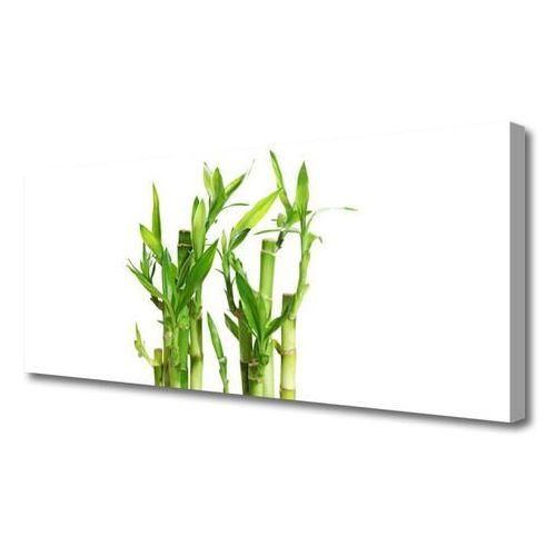 Obraz na Płótnie Bambus Łodyga Kwiat Roślina