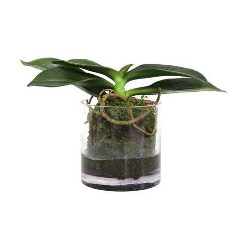 HKliving Szklana waza z korzeniami falenopsis - HK Living AFL7011, AFL7011