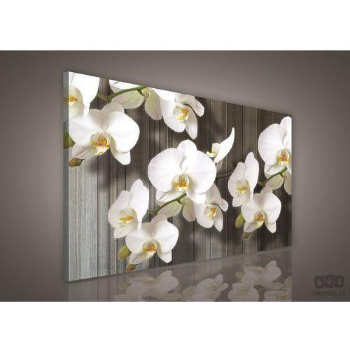 Obraz biały storczyk pp416o1 od producenta Consalnet