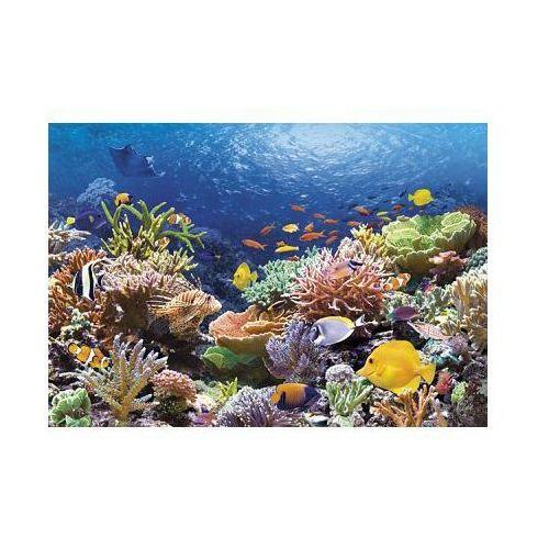 Castor  1000 el. rafa koralowa
