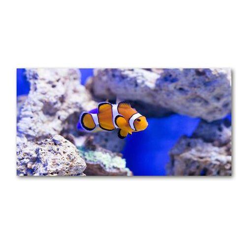 Foto obraz akryl Błazenek rafa koralowa