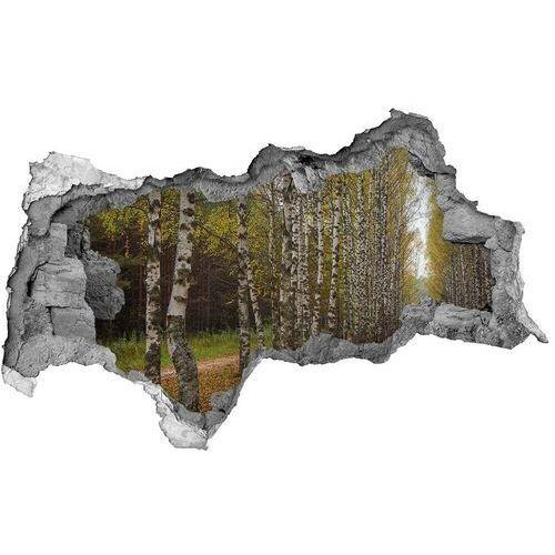 Dziura 3d w ścianie naklejka Aleja brzóz