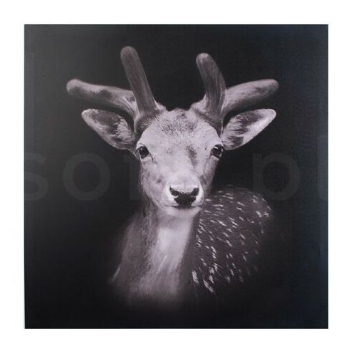 Obraz 70x70x1,8cm SARNA