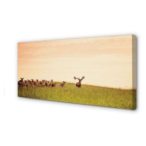 Tulup.pl Obrazy na płótnie stado jeleni pole wschód słońca