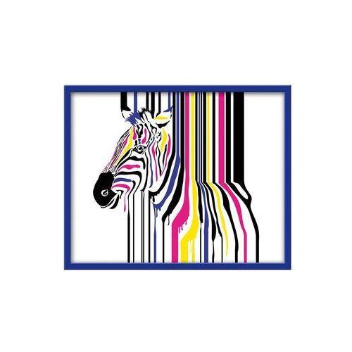 Obraz zebra 50 x 40 cm marki Knor