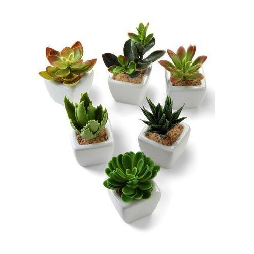 Sztuczne kwiaty sukulenty (6 szt.) zielony marki Bonprix