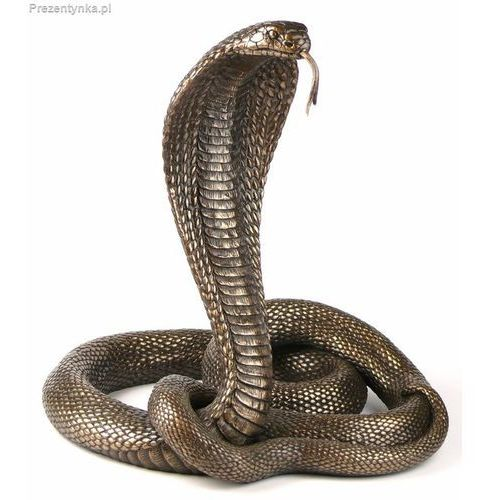 Tańcząca kobra Veronese brąz