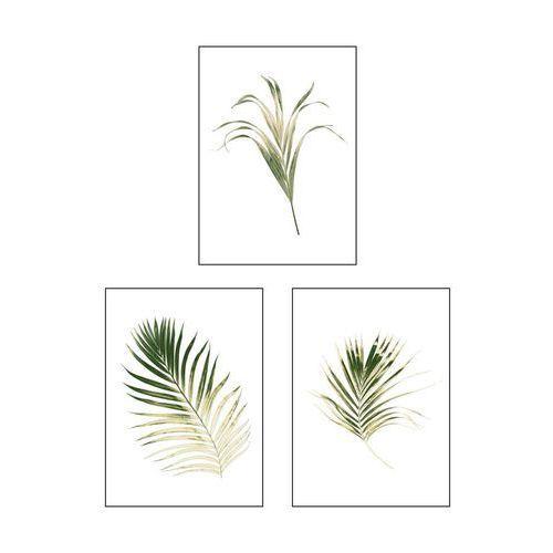 Art canvas Zestaw 3 plakatów botanika 13 x 18 cm