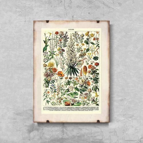 Plakaty w stylu retro Plakaty w stylu retro Kwiatowy nadruk Adolphe Millot