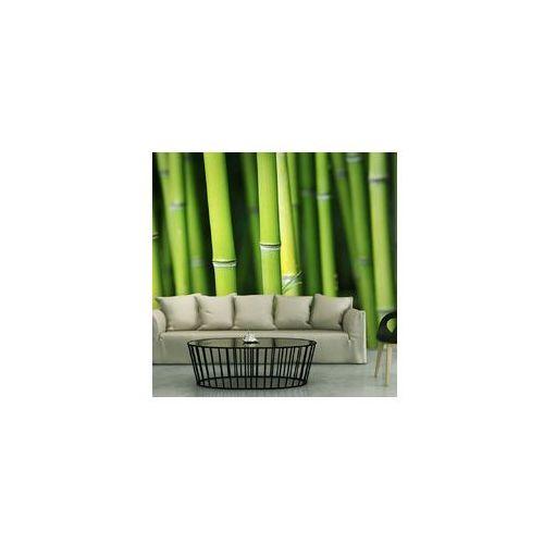 Artgeist Fototapeta - bambus