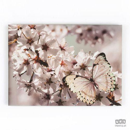 Graham&brown Obraz z brokatem motyl na kwiatach 41-498