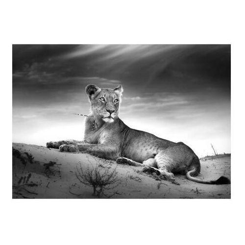 Obraz Glasspik Lioness Animal 70 x 100 cm, GL105