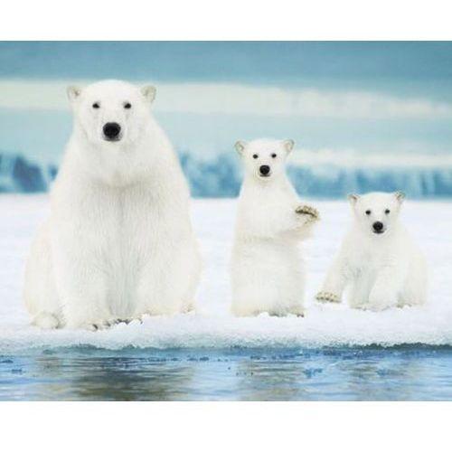 Rodzina Niedźwiedzi Polarnych - plakat