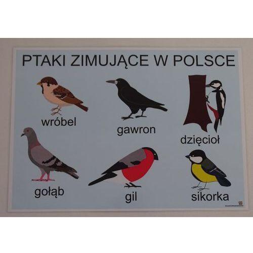 Ptaki zimujące w polsce- plansza demonstracyjna marki Bystra sowa