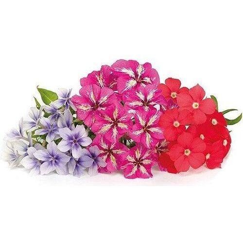 Wkład nasienny lingot kwiaty jadalne floks marki Veritable