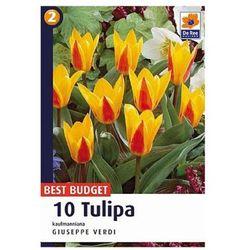 Tulipany Giuseppe Verdi, CJBB457