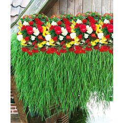 Starkl 3x begonie zwisające + 1x bambus zwisający 4 szt