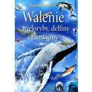 Walenie wieloryby delfiny i morświny, książka w oprawie twardej