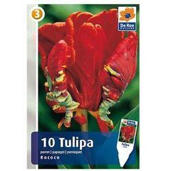 Tulipan Rococo czerwony