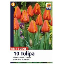 Tulipany Orange Cassini (8711148316701)